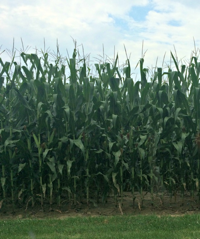Theres more than corn in Indiana