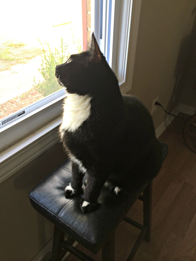 thelma lou bird watching